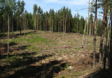 EU underkänner svensk skogslinje