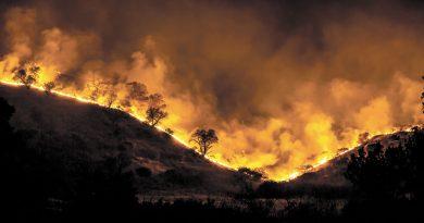 Sannolikheten för en ensartad barrskog att brinna ned är hela 24 gånger högre än för en lövskog.
