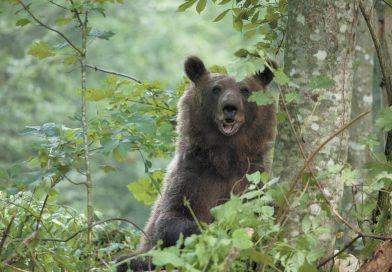 Balkans djurliv får ökat skydd