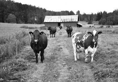 Jordbrukets utveckling i modern tid