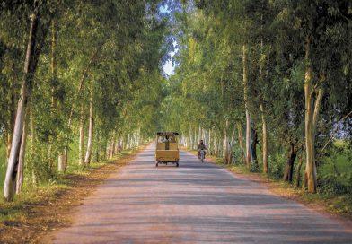 """Pakistans gröna återhämtning: En """"tsunami"""" av träd"""