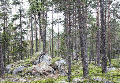 Du gamla, Du fria, Du fjällhöga nord – den svenska skogspolitiken